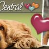 Dog Lover Central